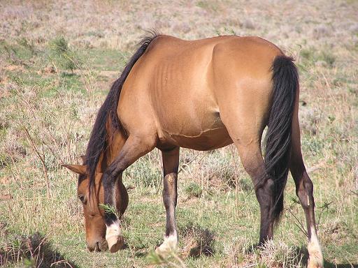 arabian horse wallpaper. A Herd of Arabian horses