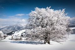 Winter Day (andywon) Tags: winter white snow mountains cold tree nature germany landscape deutschland hills schwarzwald blackforest beech winterwonderland schauinsland badenwrttemberg explored gieshbel gettyimagesgermanyq1