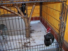 Jake and Jupiter in the anteater cage