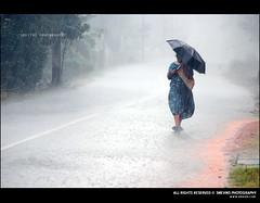 Decemberile Mazha..... (Smevin Paul - Thrisookaran !! www.smevin.com) Tags: road india water its rain umbrella way paul photography drops nikon december photos feel series heavy raining athirapally mazha smevin smevinpaul d40x malayalikkoottam smevins thrisookaran wwwsmevincom