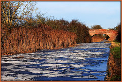 Frozen Canal. (Picture post.) Tags: trees winter green ice nature reeds landscape canal frozen eau wildlife bridges bluesky 1001nights paysage frozenwater hdr winterice blueribbonwinner otw skyreflections mywinners abigfave platinumphoto goldstaraward spiritofphotography 1001nightsmagiccity