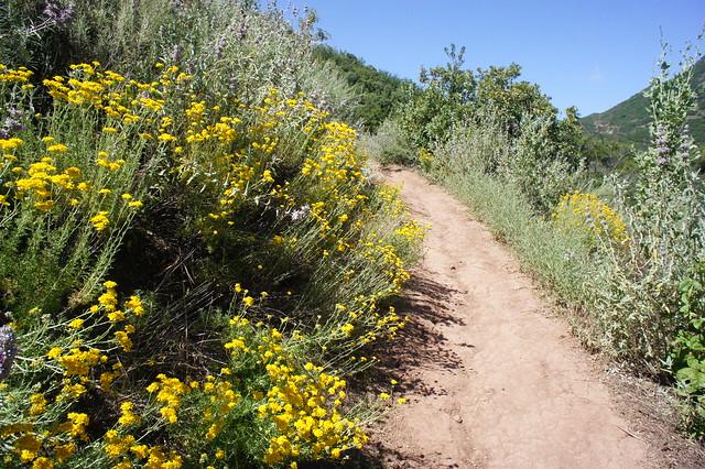 Cozy Dell Trail