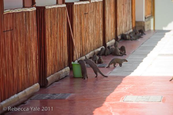 RYALE_Rwanda_Uganda_Safari-324