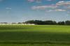 Dust raiser. (DanielKent) Tags: farm green blue sky truch truck dust sunny train via rail telephone lines