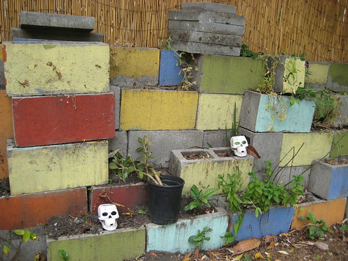 Cinder Blocks in My Garden