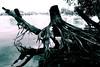 Creeping creatures ;-) (reinhard.klar) Tags: water lumix wasser root wurzel lx3 ashowoff