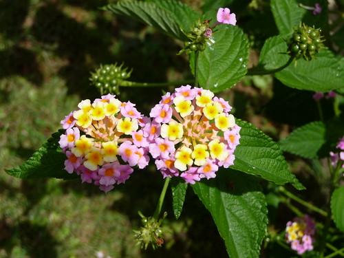 flowers tenerife