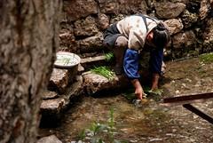 Lijiang life (Misse Ward) Tags: china yunnan lijiang ancientcity ancientchina washingvegetables
