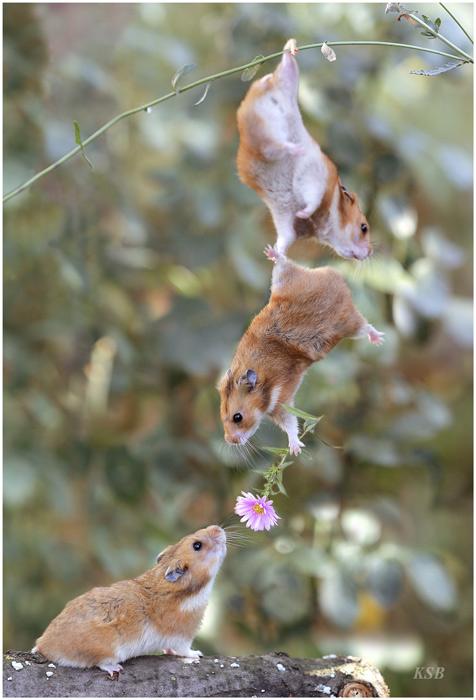 3 hamsters y una flor