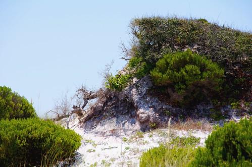 White Sand Florida Panhandle