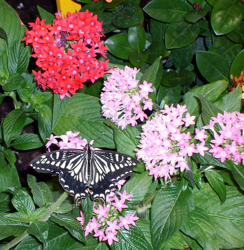 Washington D.C.   National Museum Of Natural History   Butterfly Garden (4)