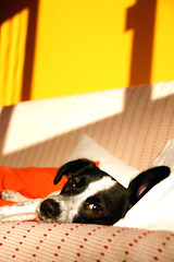 You've got a friend (flavita.valsani) Tags: dog pet co home 1 shadows photoshoot sopaulo couch explore sampa cachorro pooch bestfriend adopted adoption feelslikehome viralata littleking 252 pestinha sapeca valsani barth adotartudodebom euadoteiumco