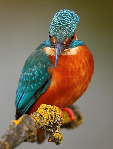 3811265258 a34c482bdf Beautiful Birds   The Splash of Colors!!!