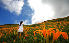 (nodie26) Tags: life portrait people flower girl landscape feel taiwan   hualien        yellower