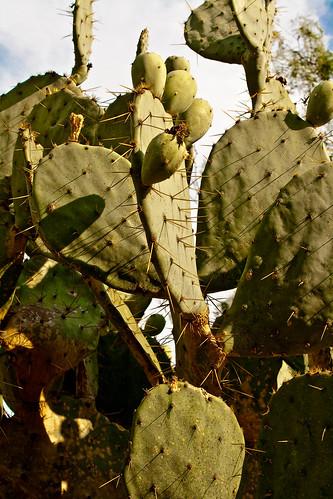 Cactus Day-3