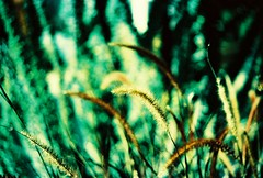 Suppose (kevin dooley) Tags: life wild brown plant green film beautiful grass analog gold book golden xpro fuji cross minolta superia rich picture deep 1600 tokina processed 80200mm suppose xgm tempecamera supposition szx plantware book0
