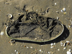 playera (blopsmen) Tags: abandoned beach shoe decay trainer abandonado tcf cruzadas