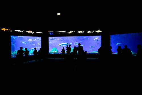 SeaWorld-1024
