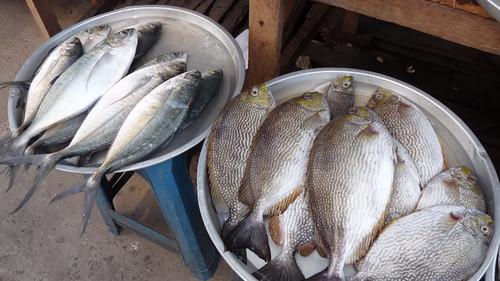Koh Samui Nathon Market コサムイ ナトン市場1