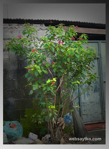 life saving plant