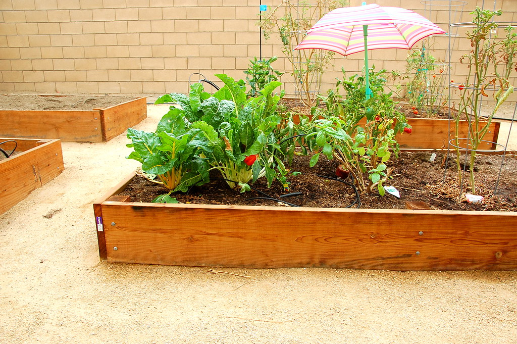 our raised beds