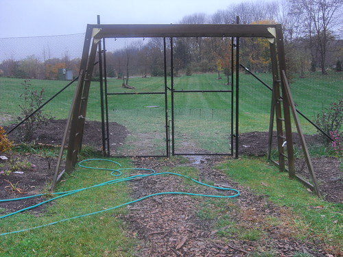 old swing set as a grape arbor