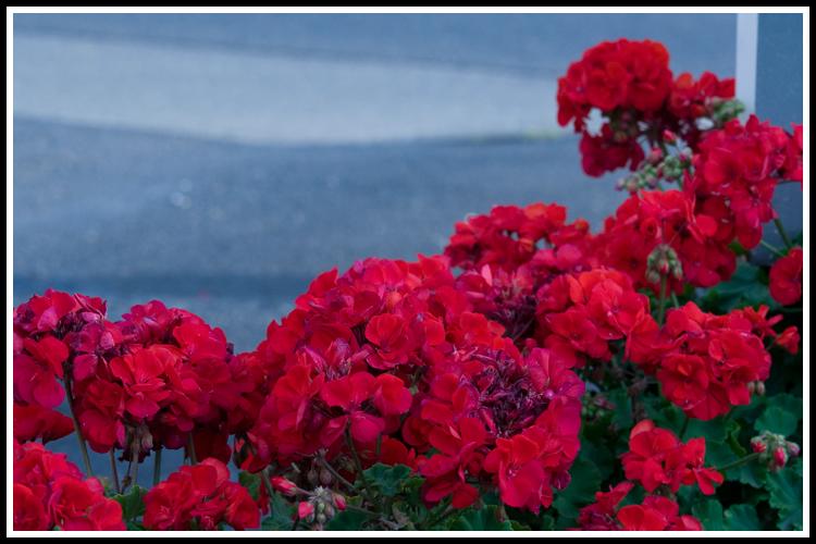 flowers_orig