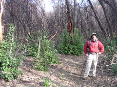 SC Isle-Vent10-09 155 (Wilderwil) Tags: new trees out joe growth burnt among madrone