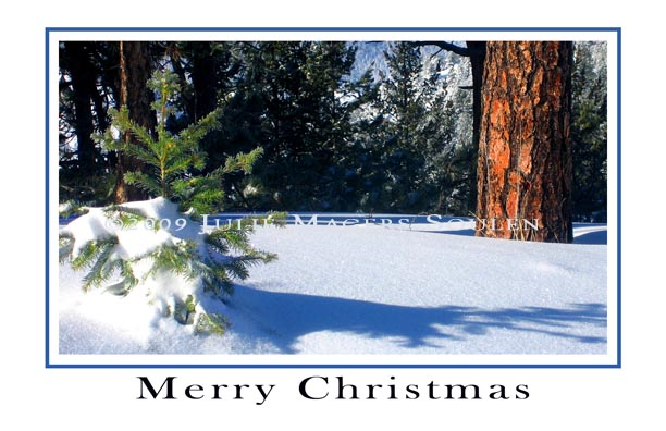 Little Pine Christmas Card