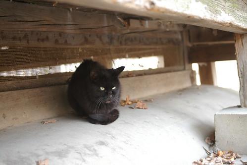 Today's Cat@20091121