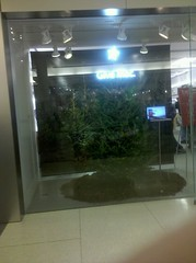 Apple Store Window
