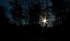 Good Morning Sunshine (Lisa568) Tags: blue trees sky sun black sunshine silhouette forest sunrise canon branches sunburst rays 1022mm starburst xsi