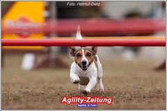 SV-Agility-Darmstadt: Jack Russell Terrier