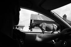 . (Mangiu) Tags: bw horse bn cavallo calabria mangiu manuelamontanarelli