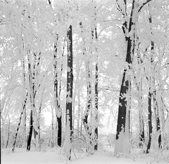 Hardly Working (subtlet) Tags: trees bw mountain snow 120 6x6 film kodak tmax pennsylvania pair agfa laurel isolette kodaktmax100 100tmx 2pair