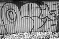 leguan 89 (leguaninvasion) Tags: elephant le 89 throwup leguan 2011