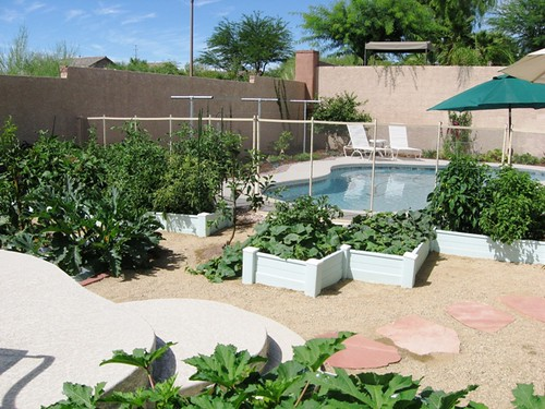 Wonderful Summer Veggies From A First Time Desert Gardener   Las Vegas Gardening