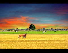 Another Dream  / Otro sueo (DiEgo bErrA) Tags: horse tree field arbol caballo cow campo vaca aplusphoto grouptripod