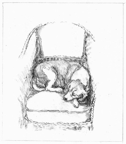 Dog sleeping in wicker chair