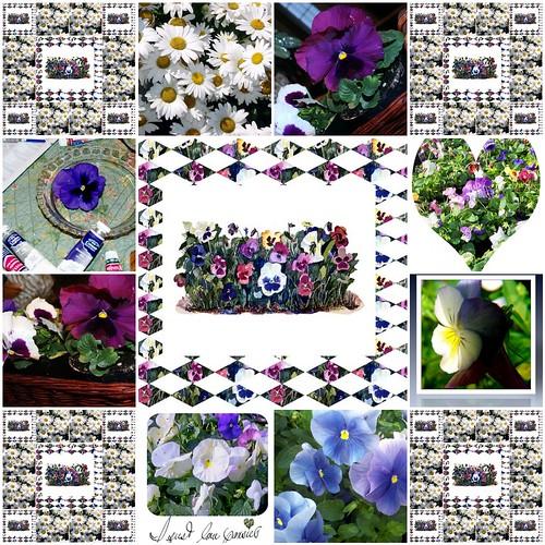 pansies & daisies