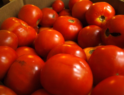 25 pounds of tomatoes