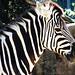 Taronga Zoo_12
