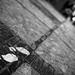 Footprints - New photos on www.lucamoglia.it