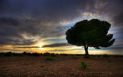 Otra noche, otra vez slo. (Leandro MA) Tags: rbol pino solitario serrada majuelo leandroma