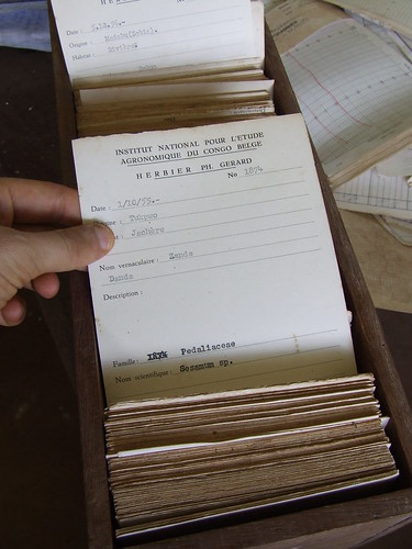 Herbarium labels from the 1950s
