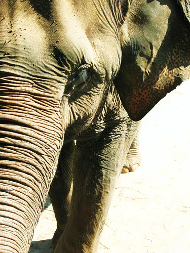 - Elephant Nature Park, Chiang Mai, Thailand