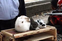 (Fotografn) Tags: rabbit turkey turkiye istanbul rabbits