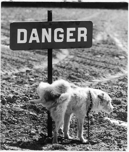 piss-on-danger