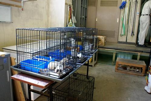 中越動物保護管理センター