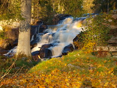 Miniature Waterfall (Peter Nyhln) Tags: autumn forest landscape waterfall leaf country olympus autumnleaves landskap lv autumnleaf vattenfall hstlv e520 olympuse520 100commentgroup peternyhln gunnerhulu